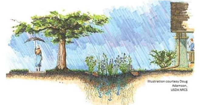 Rain Gardens: State Parks Has Them and You Can Have Them Too