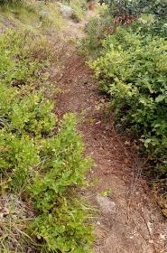 Social Trail