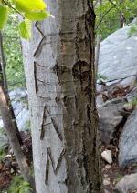 TreeCarve