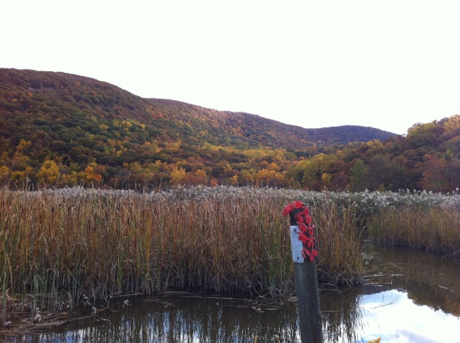 Marsh Madness: Restoration of Iona Marsh from Invasive Phragmites