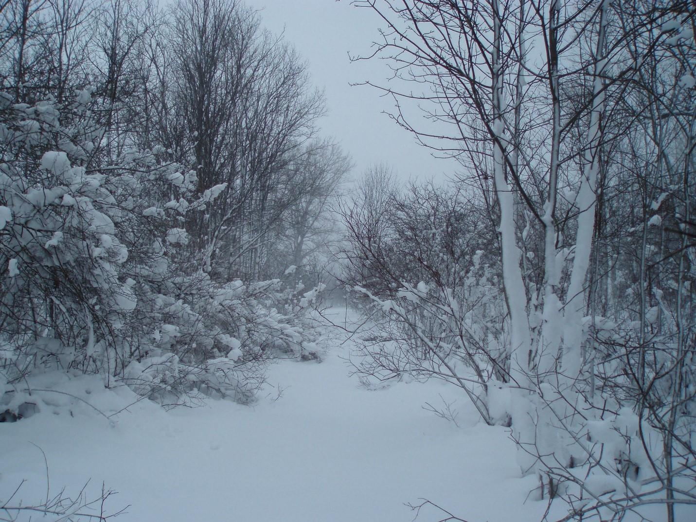 SnowyScene