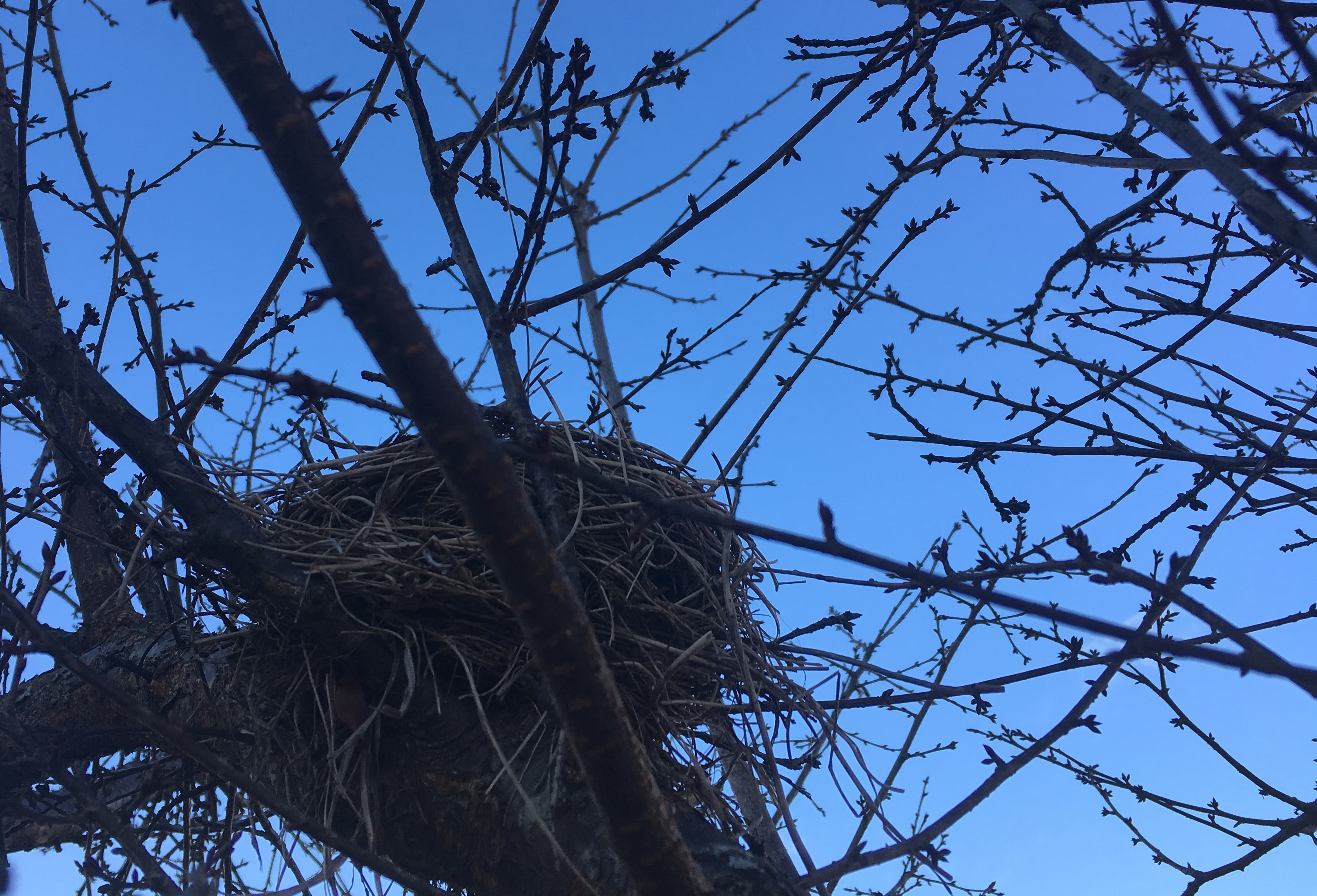 Bird_nest_JLundgren3