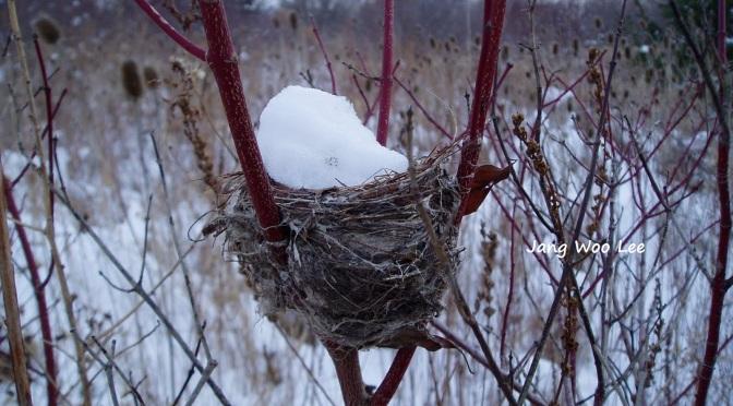 Nest Hunt