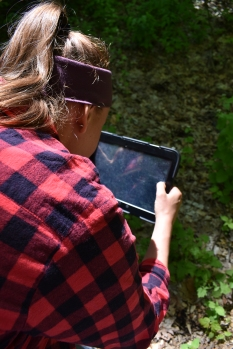 Capturing an image of an invasive species, photo by : Brittney Rogers, iMapInvasives Research Project Assistant