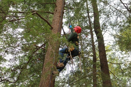 A View from the Treetops:  life as a forest health specialist