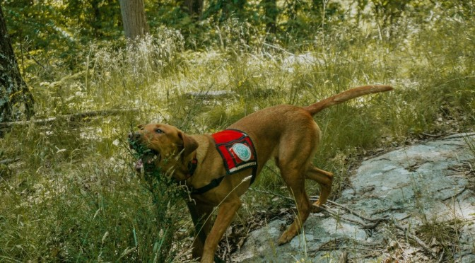 Efforts to Control Invasive Species in Parks Gain a Four-Footed Team Member