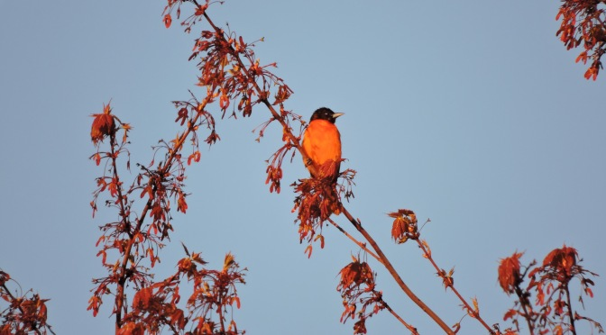 """Big Day"" Birding Adventure in State Parks of Western New York"