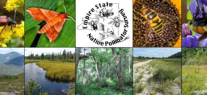Empire State Native Pollinator Survey – You Can Help!